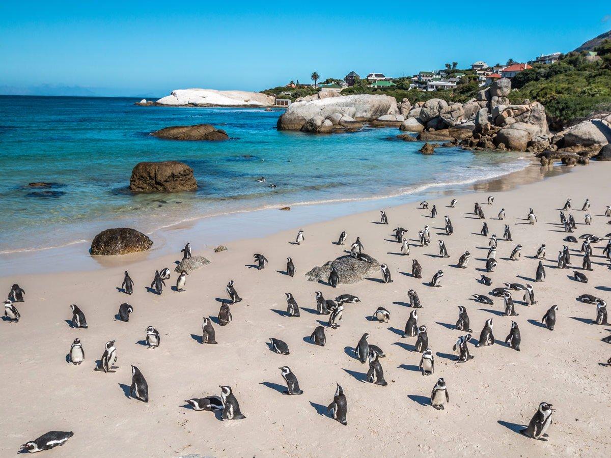 Boulders Beach Кейптаун, Африка К огромному пляжу стекаются толпы туристов со всего мира. Здесь сохранилось одно из последних поголовий африканских пингвинов — даже название говорит о том, что этот вид находится под угрозой исчезновения.