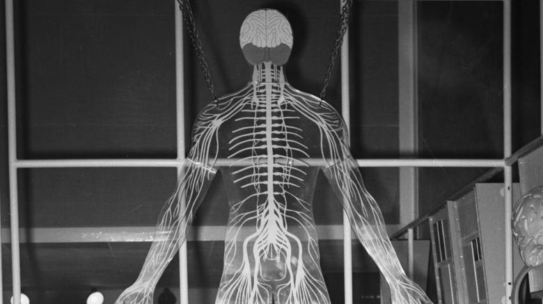 Печень трудоголик Печень работает больше, чем любой другой орган или железа в человеческом теле, за исключением, возможно, головного мозга. Ученые считают, что печень исполняет около 500 отдельных функций, в том числе производит альбумин и хранит некоторые витамины. У этой многозадачности есть и обратная сторона: печень склонна к многочисленным недомоганиям.