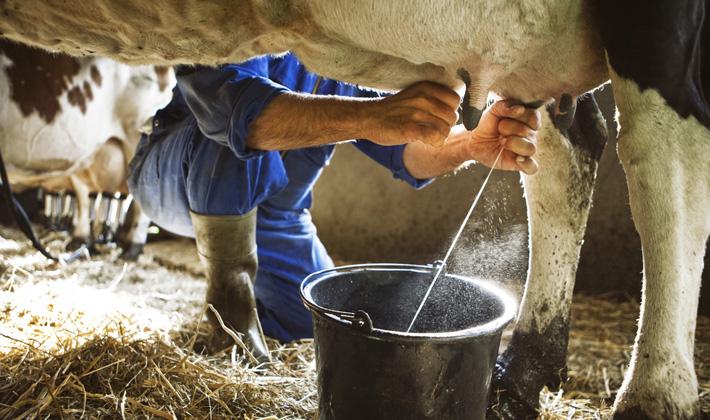 Сырое молоко Этот продукт начинает портиться очень быстро, даже в холодильнике. Кейтлин Гласс, кандидат технических наук, заместитель директора Института исследований продовольственной программы в Университете штата Висконсин-Мэдисон уверяет, что в непастеризованном молоке активно развиваются листерии — бактерии, являющиеся возбудителями многих болезней.