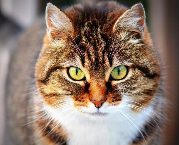 Кошка и пожар Крейг Дживс мирно спал в своем горящем мельбурнском коттедже. От пробуждения перед лицом апостола Петра парня спас кот Салли: недолго думая, он свалился Крейгу на голову и начал кусать за уши.