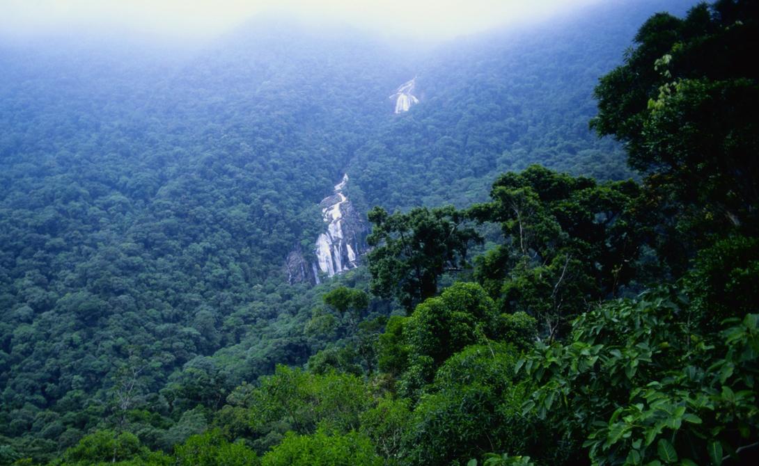 Тропические леса Амазонки Плотная чаща леса, населенного опасными животными и ядовитыми растениями, остается непреодолимым препятствием для картографов. В тропических лесах до сих пор сохранились дикие племена, которые понятия не имеют о внешнем мире.