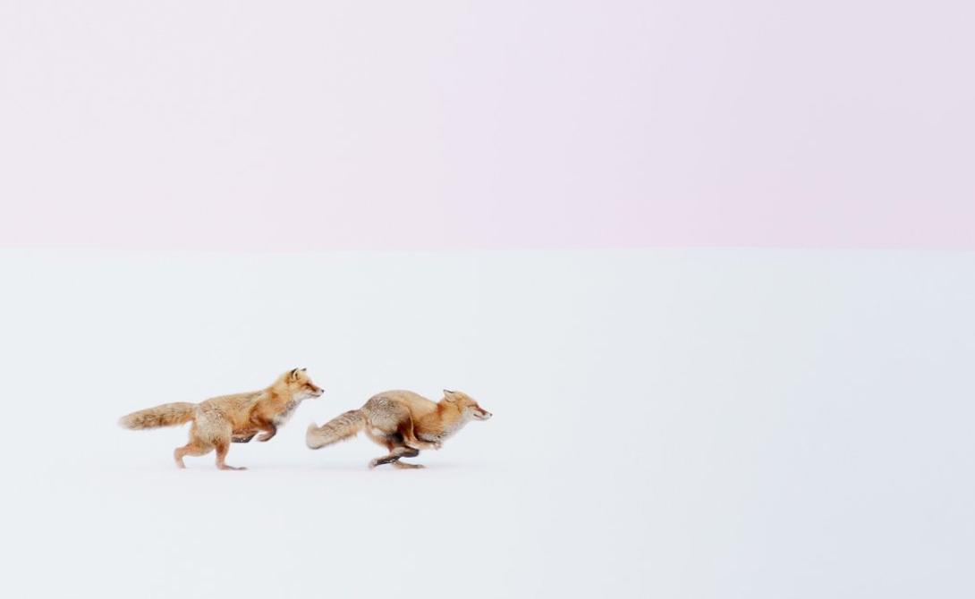 Wherever you go, I will follow you!! Автор: Хироки Ину Лисы гонятся друг за другом по заснеженным полям на севере Японии.