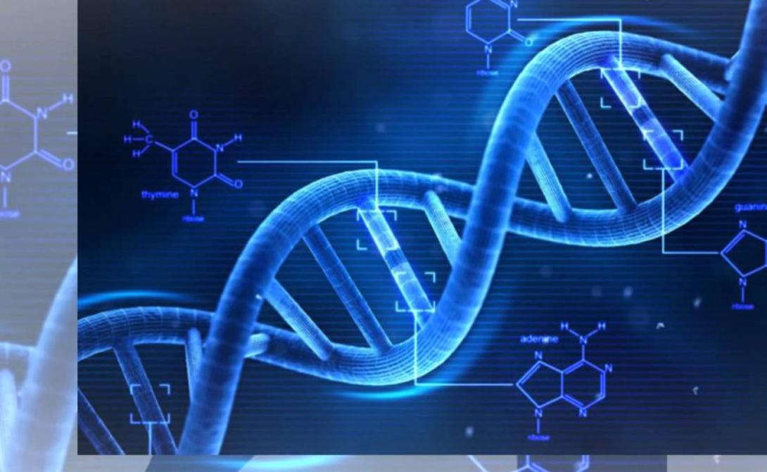 Геном старения По результатам исследований ученые выявили, что люди, употребляющие большое количество газировки, имеют более короткие теломеры — своеобразные предохранительные элементы на концах ДНК-содержащих хромосом, которые защищают ваши генетические данные. Теломеры обычно укорачиваются только с возрастом, а предыдущие исследования показали связь этого процесса с повышенным риском сердечных заболеваний, диабета и даже некоторых видов рака.