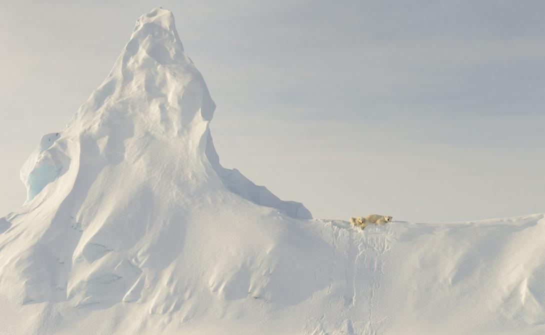 Bears on a Berg Автор: Джон Роллинс Белая медведица и ее детеныш отдыхают на айсберге вблизи острова Баффина.