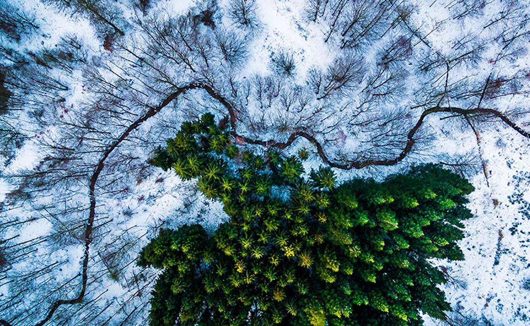 Лес Кэлбирис Категория: живая природа Первое место