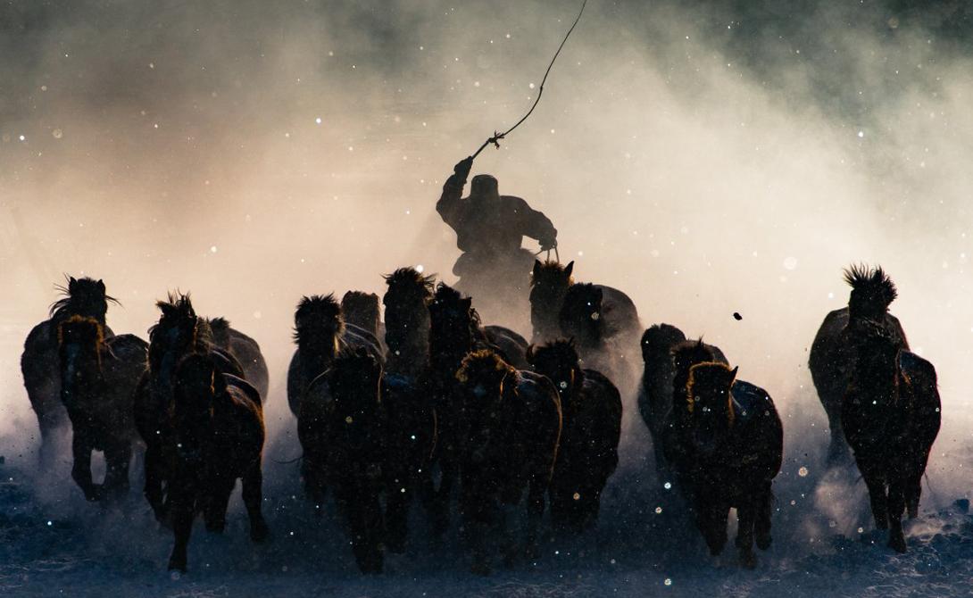 Winter Horseman Автор: Энтони Лау Монгольский погонщик управляет стадом лошадей. Этот снимок получил главный приз контеста.