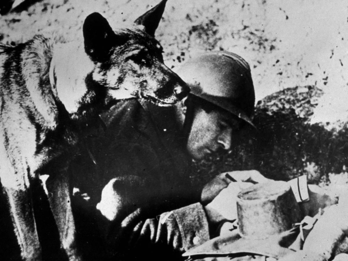 Американские псы Гражданская война стала для Америки таким же испытанием, как для нас Октябрьская революция. Американцы активно использовали своих собак, которые в ту пору были почти у каждой семьи и предназначались для охоты.