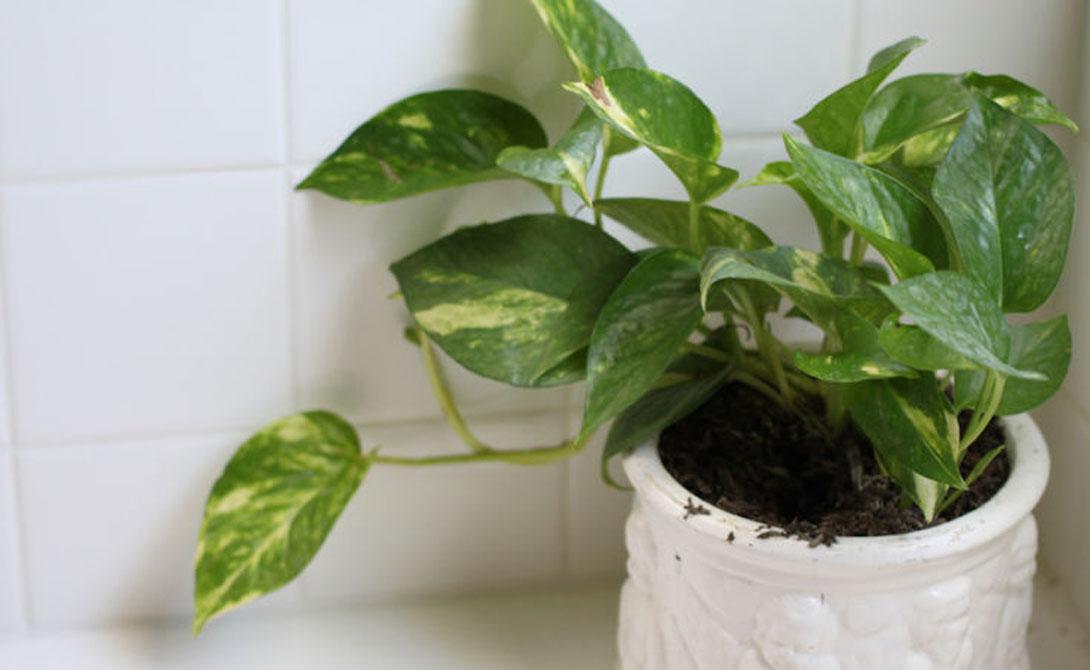 Новые места Попробуйте оглядеть квартиру с нового ракурса. Подоконники — классическое место для высаживания растений, но не единственное. Обратите внимание на ванную комнату, которая и в самом деле является идеальным пристанищем для растений.