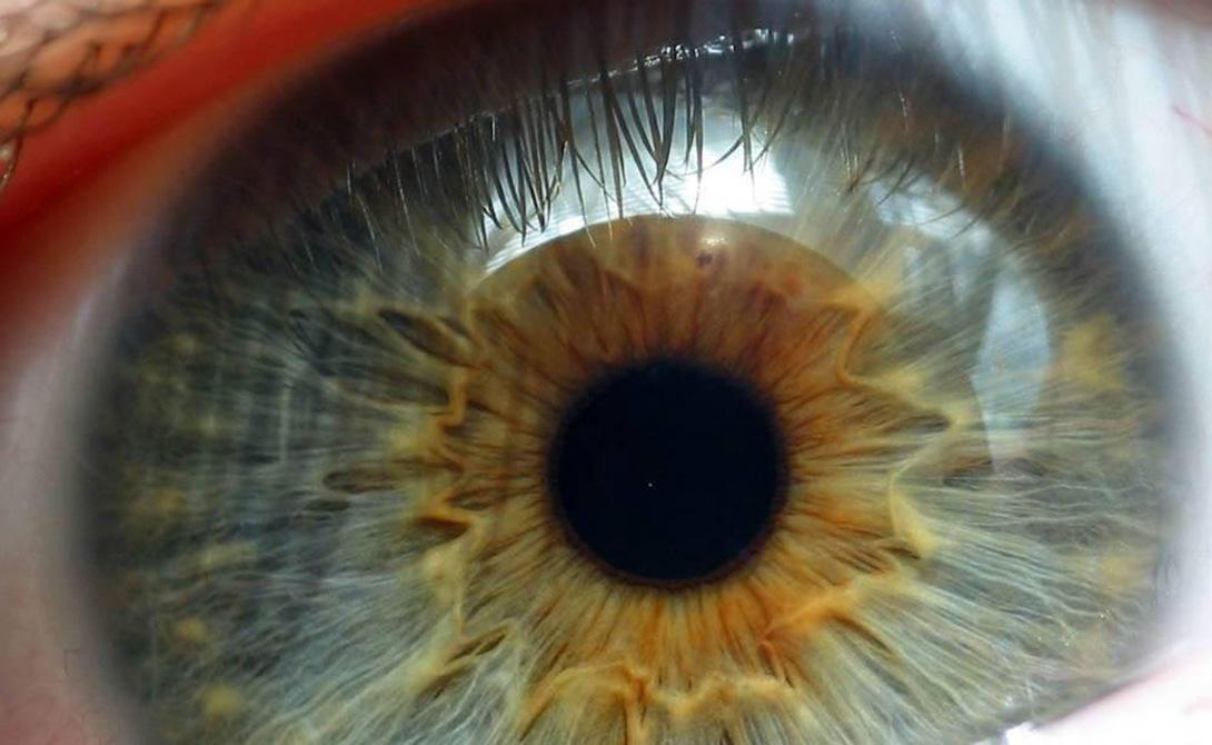 Палочки Сетчатка глаза обладает двумя типами фоторецепторов — колбочками и палочками. Нам интересны так называемые палочки (rod cells), названные по типу цилиндрической формы. Они преобразуют световые раздражители в нервное возбуждение. Светочувствительность палочек достигается благодаря наличию пигмента родопсина.