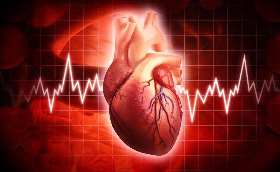Рыбий жир Всего капсула рыбьего жира в день снижает ритм сердечных сокращений на целых 6 ударов/минута. Биологи предполагают, что этот препарат способствует улучшению синхронной работы сердца и блуждающего нерва.