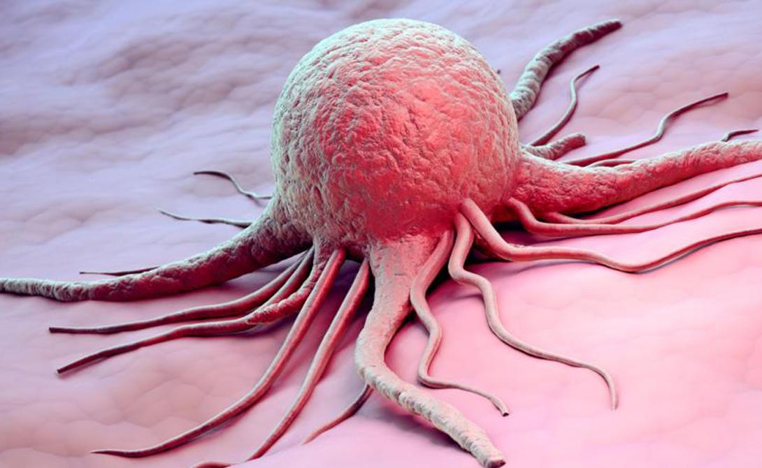 Игра вне правил Раковая клетка игнорирует все правила, по которым развиваются все прочие клетки организма. Процесс деления контролируется на генном уровне: к примеру, при формировании конечностей некоторые клетки закончили существование запрограммированным «самоубийством» — чтобы выкроить пространство между пальцами. Этот процесс называется атопоз.