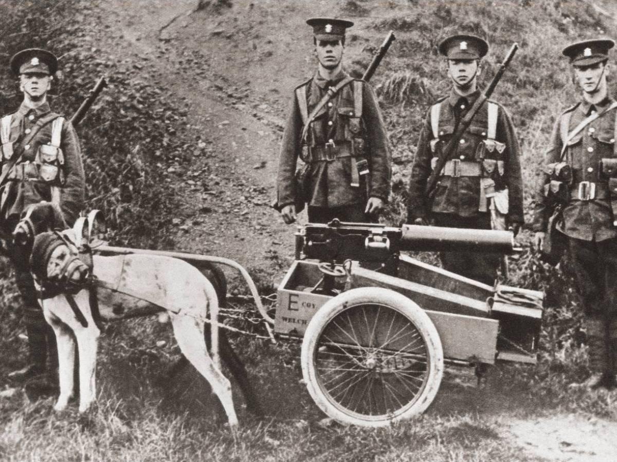 Собаки-пулеметчики Нет, конечно стрелять собак никто не обучал. Но часто во время конфликтов первой половины века псов использовали как тягловую силу, привязывая к ним небольшие пулеметы. Зачастую оператор даже не отвязывал питомца от станины во время стрельбы.