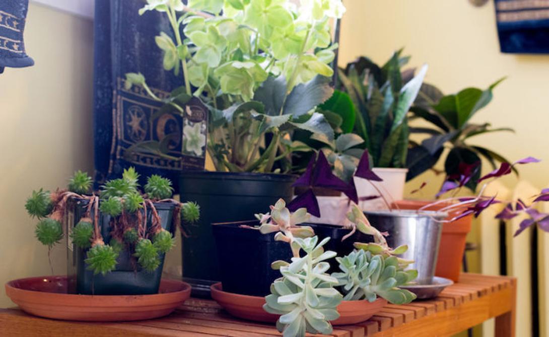 Правильные растения Учтите, что большая часть представителей флоры лучше всего чувствует себя при обильном солнечном свете. Впрочем, не нужно отчаиваться, если в доме вашем нет больших окон. Просто выбирайте те растения, которые отлично чувствуют себя и в тени.