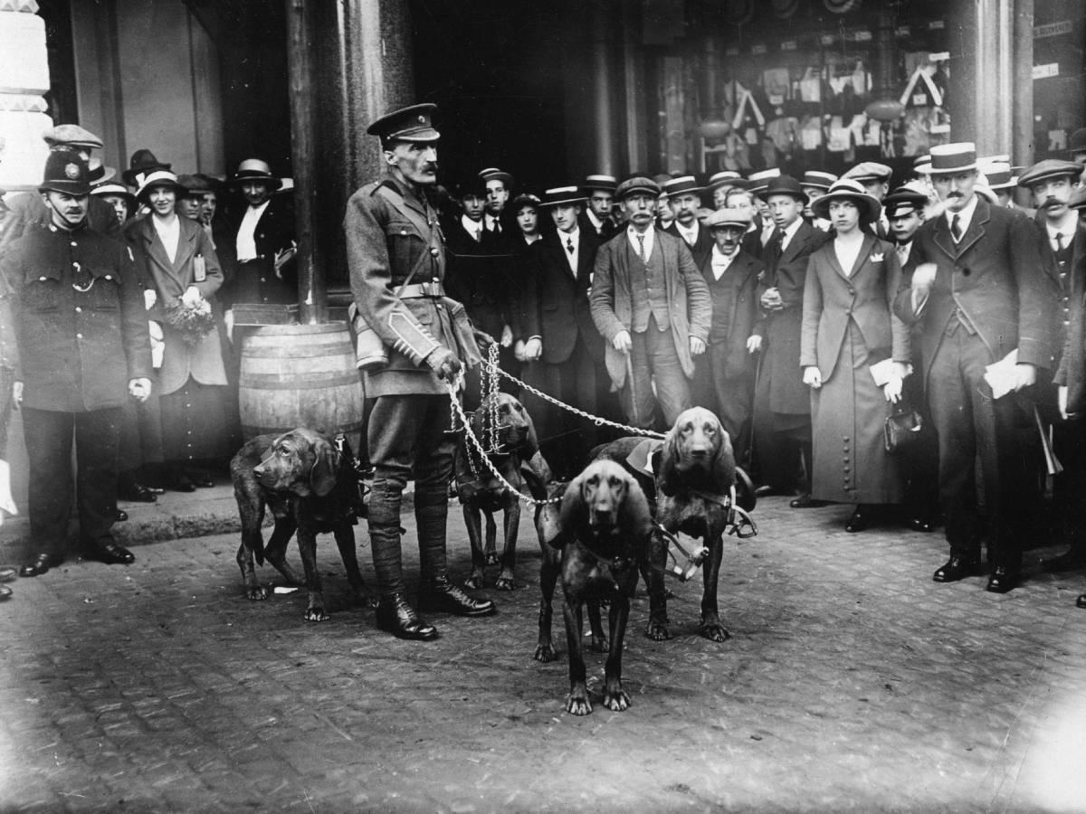 Школа боевых псов В 1917 году англичане открыли первую в мире официальную школу-питомник для выращивания боевых собак. Выпускниками War Dog School стали более 7000 псов, большая часть которых пошла служить в армию и полицию.
