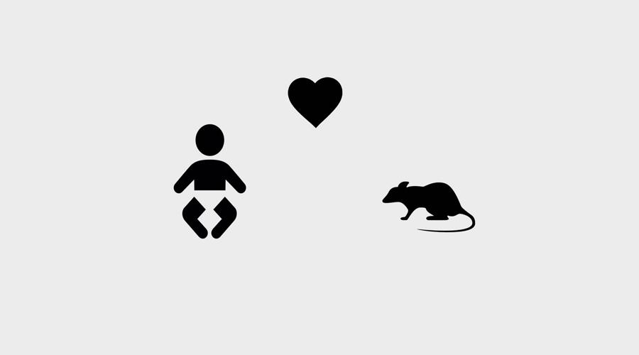 Маленький Альберт И еще один мрачный и страшный эксперимент, на сей раз проведенный над младенцем. Джон Б. Уотсон из Университета Джона Хопкинса развивал у 9-месячного Альберта иррациональные страхи. Он показывал ребенку белую крысу — и мальчик проявлял к животному вполне разумный интерес. Затем психолог ударял в железный гонг, что пугало мальчика. Так повторялось до тех пор, пока Альберт не стал выказывать признаки страха при каждом появлении крысы, уже безо всякого гонга.