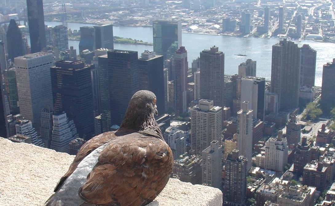 Башня Свободы Нью-Йорк, США 541 м Здание Всемирного торгового центра восстало из руин как феникс, обновленным и еще более высоким. Строительство завершилось в мае 2013 года. На последнем этапе строители установили на вершине небоскреба 124-метровый шпиль.