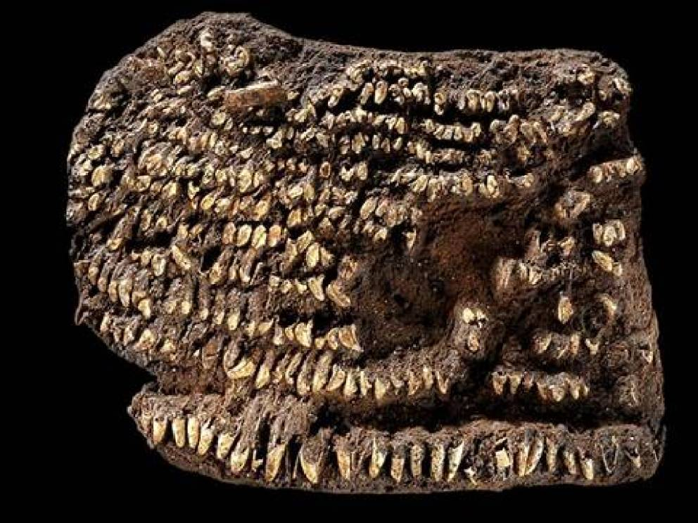 Кошелек 4500 лет Кожаная сумка, украшенная собачьими клыками, была найдена в могиле древнегерманского воина. Археологи датировали кошелек примерно бронзовым веком — ориентировочно тогда украшение предметов обихода вошло в моду.