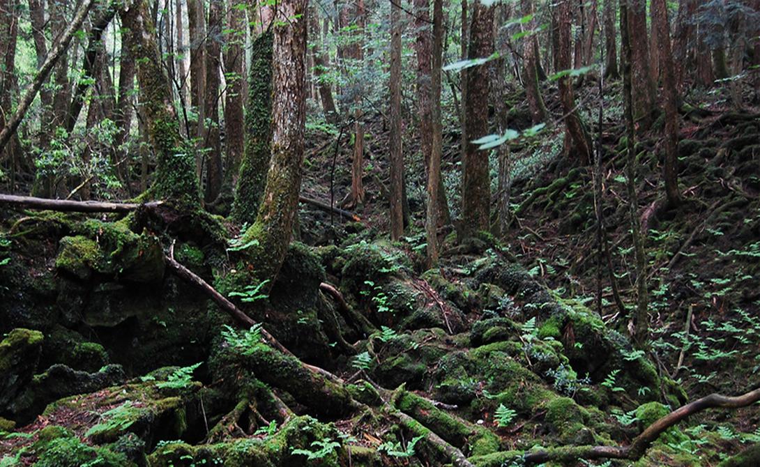 Лес Аокигахара Япония Еще его называют лесом Самоубийц. Он лежит у основания горы Фудзи и считается у местного населения прибежищем демонов. Кроме того, сюда приходят сводить счеты с жизнью подростки. По статистике, ежегодно здесь гибнет более сотни людей.