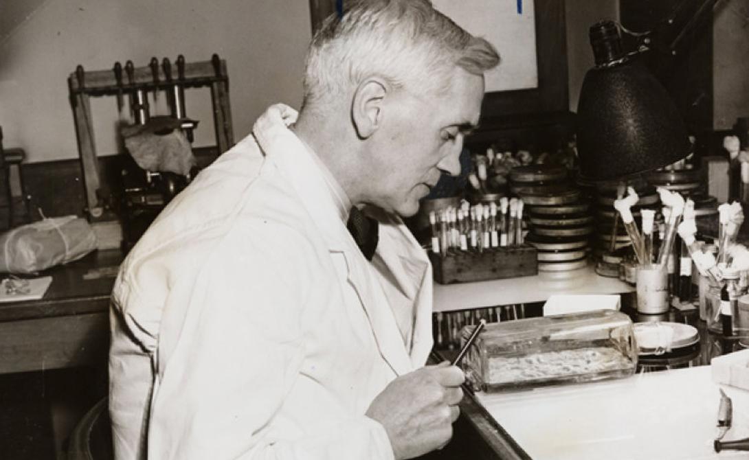 Пенициллин Доктор Флеминг открыл пенициллин совершенно случайно. В 1928 году ученый проводил исследование вируса гриппа и заметил, что одна из его чашек Петри с культурой бактерий была заражена грибком. Флеминг не стал выбрасывать «испорченный» препарат, а принялся наблюдать за развитием. Увидев токсичность грибка для стафилококка, ученый смог выделить препарат пенициллин, который стал спасением для сотен тысяч людей.