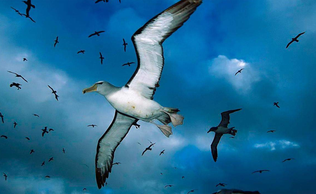 Гиганты в мире хищных птиц