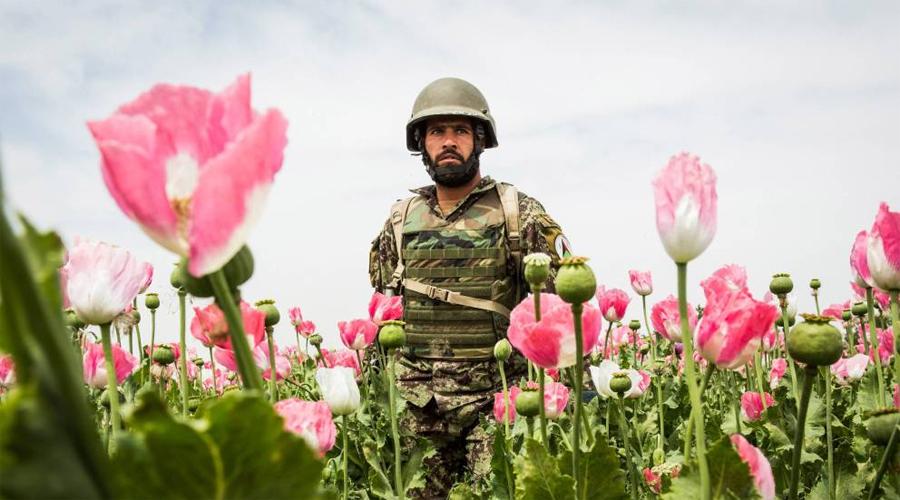 Война в Афганистане Героин и опий Эта проблема по большей части коснулась американского контингента войск в Афганистане. Членам Талибана употреблять наркотики было строго запрещено, а вот морпехи в незнакомой стране, находясь под постоянным давлением начали массово приобщаться к зелью. По некоторым оценкам, Америка потратила больше денег на реабилитацию наркозависимых солдат, чем на саму операцию в Афганистане.