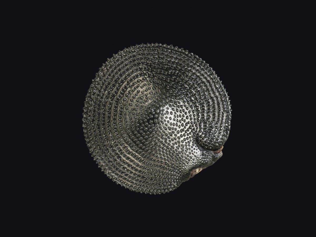 Семена диких цветов Индийской конопли