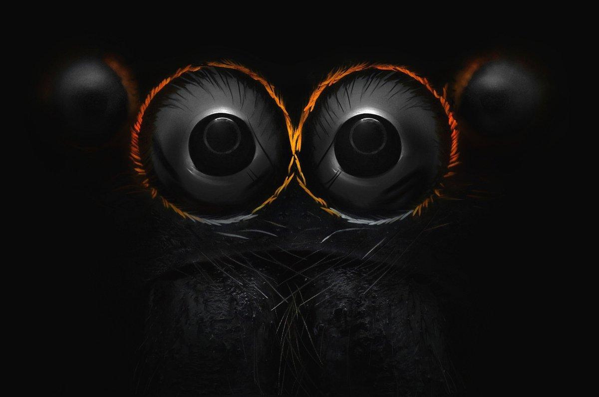 Глаза прыгающего паука