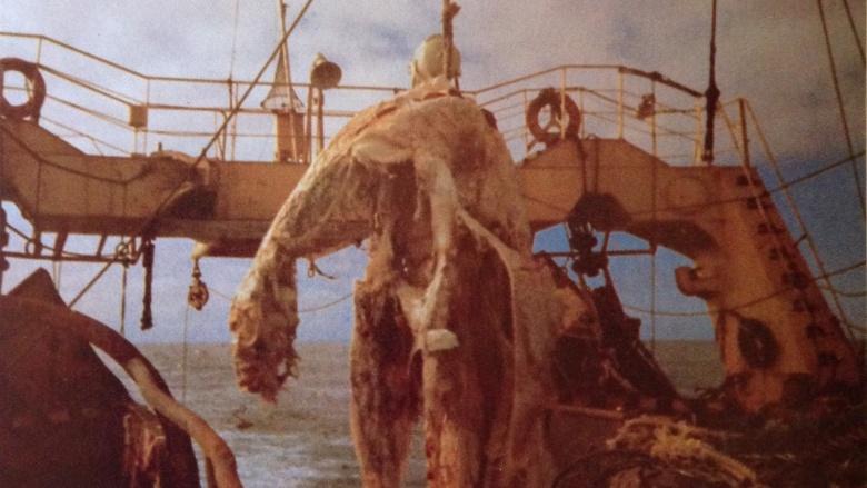 Туша Дзуйё-мару В 1977 году японский рыболовный траулер вытащил сетями труп странного зверя. Экипаж сделал несколько снимков, а штурман даже взял образцы ткани. По виду находка напоминала останки плезиозавра, однако анализ материала показал другое: рыбакам посчастливилось выловить разлагающийся труп гигантской акулы — существа редкого, но вполне реального.