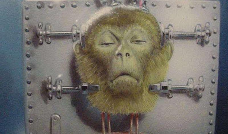 Пересадка головы обезьяны Доктор Роберт Дж. Уайт был одержим мозгами. Нейрохирург из Кливленда был первым из американских врачей, кто во всеуслышание объявил мозговую ткань физическим хранилищем человеческой души. В 1970 году Уайт провел один из самых громких экспериментов всех времен и народов: взял и пересадил голову одной макаки другой. Правда, на ту пору США предпочли результаты работы оставить засекреченными. Однако сравнительно недавно Уайт свои публикации представил на суд общественности. Он и в самом деле добился немалых успехов: обезьяна с пересаженной головой могла жить несколько дней после операции.