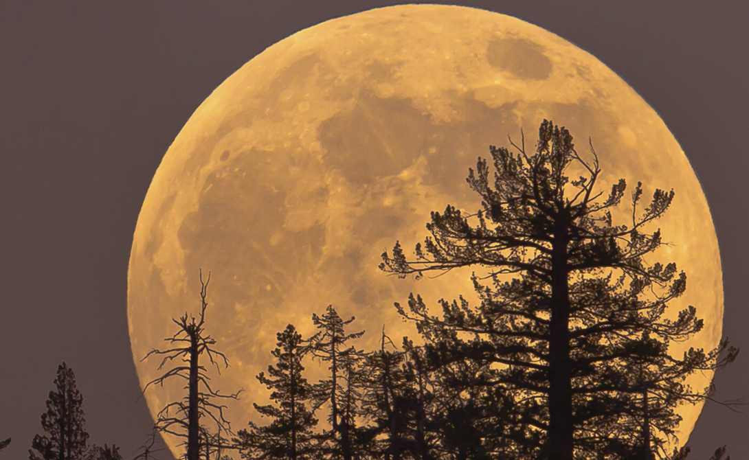 Лунная иллюзия Существуют, впрочем, и обманные случаи суперлуния. Обычно именно такие используют профессиональные астрологи, чтобы подогнать то или иное событие из жизни человека к космическому явлению. Но, на самом деле, астрологи имеют дело с так называемой лунной иллюзией, при которой Луна визуально кажется большей по размеру.