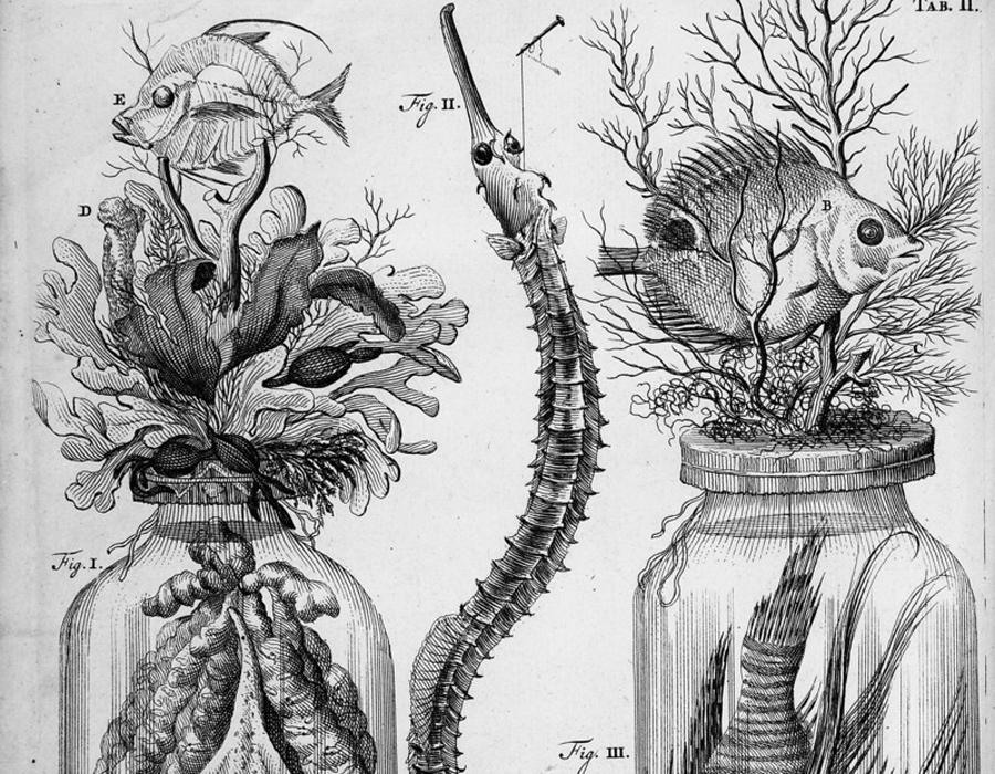 Заспиртованная магия Недостатка в посетителях у музея не было. Люди из средних слоев, не отличавшиеся широким кругозором и образованием, видели в искусстве Рюйша настоящую магию. На полвека раньше ученого наверняка бы просто сожгли за его необъяснимое искусство сохранять части мертвых тел в изумительном состоянии. «Они в этом спирте настолько свежи, —писал современник о рюйшевской коллекции детских головок, —что совсем как живые. Некоторые смотрят такими живыми глазами, словно ничто не нарушило их взгляда, хотя стоят уже несколько лет. У других едва не брызжет живая кровь; где отнята голова, там кожица с телом кажется только вчера отрезанной. В других склянках хранятся руки и ноги, на которых еще видны вены через кожу».