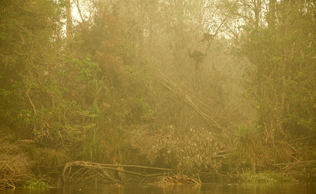 Преследуемый огнем Геран Шпикаско Еще один снимок, посвященный пожарам на Борнео. Эта фотография сделана с лодки. Самка орангутанга и ее детеныш ищут пути спасения от стихийного бедствия.