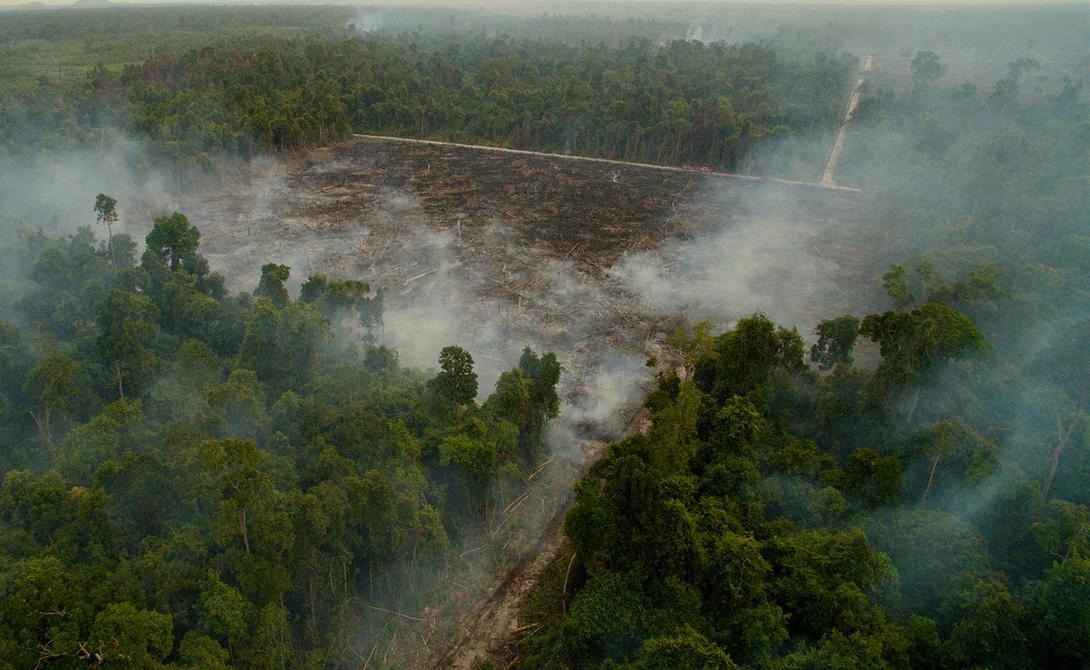 Дорога к разрушению Торен Закос Сухой сезон 2015 года превратился в засуху, а обширные пожары поставили на грань уничтожения популяцию животных во всем регионе на Борнео. Для этого снимка фотограф использовал беспилотник.