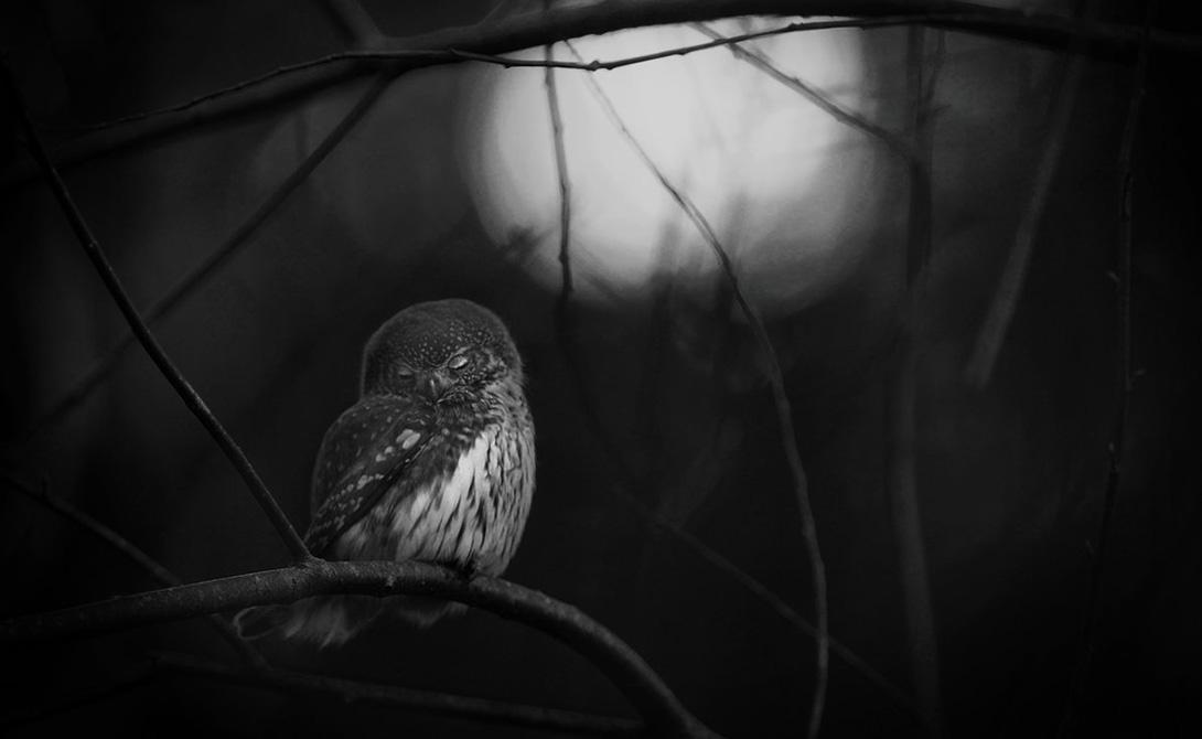 Реквием для совы Матс Андерссон Неподалеку от дома Матса долгое время жила пара сов. Прогуливаясь однажды вечером, фотограф нашел на земле тушку одной из них. Неподалеку на ветке сидела выжившая сова —ее поза выражает печаль и меланхолию.