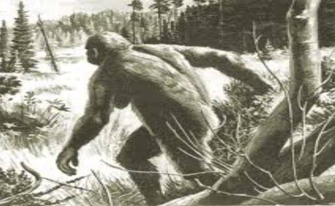 Кто эти звери! Но обрывки монографии в прессу все-таки просочились. На дворе стоял уже относительно свободный 1974 год. Опубликованные отрывки книги Поршнева показали, что ученый считал «снежных людей» неандертальцами, сумевших дожить до наших дней. Поршнев доказывал, будто эта боковая ветвь человеческой эволюции смогла приспособиться к жизни без использования огня, орудий труда и даже без речи.