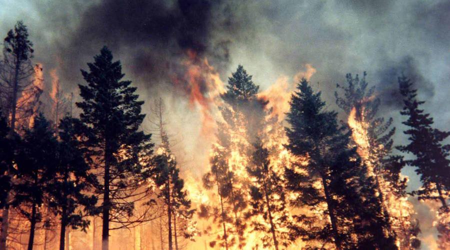 Лесной пожар Убегать из пожара нужно только против ветра, перпендикулярно кромке огня. Синтетические вещи лучше будет снять от греха подальше, все прочие намочить остатками воды. Выбираться следует к водоему или дороге, лицо же стоит прикрыть мокрой тряпкой, чтобы не обжечь легкие раскаленным воздухом.