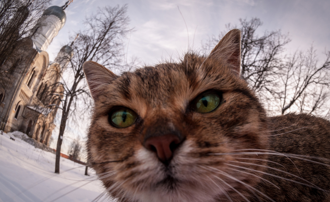 Коты Коты далеко не так обучаемы как собаки, но только потому, что предпочитают сами выбирать вектор своего развития. Хозяева кошек прекрасно знают, на что способны их питомцы ради достижения нужной им цели.