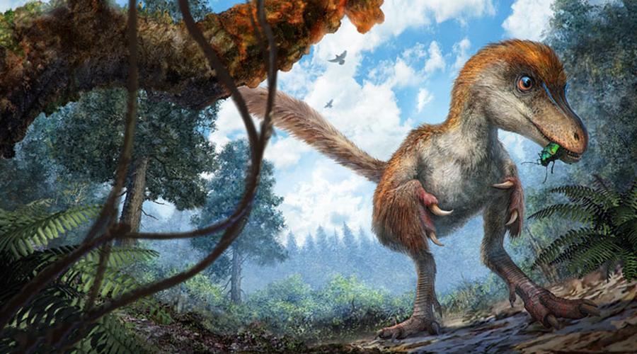 Кто это На основе структуры хвоста исследователи смогли сделать предположение и о его хозяине. Скорее всего, хвост принадлежал детенышу целурозавра. Этот подвид относится к более широкому классу тероподов, куда входят и давно вымершие тираннозавры, и современные птицы.