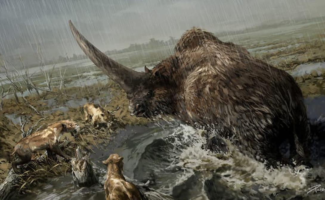 Эласмотерий Доисторический двоюродный брат носорога эласмотерий весил четыре тонны и обладал рогом длиной в полтора метра. Единорог из страшных кошмаров девственницы исчез только в конце Ледникового периода, так что наши далекие предки имели удовольствие лицезреть его воочию.