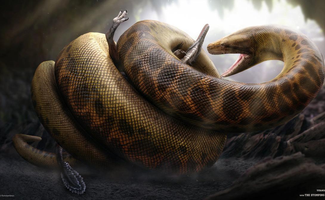 Титанбоа Боитесь змей? Тогда этот годзилла мира пресмыкающихся должен просто вогнать вас в дрожь. Тридцатиметровые змеи скользили по планете около 60 миллионов лет назад, оставаясь непревзойденными охотниками глухих джунглей и речных заводей.