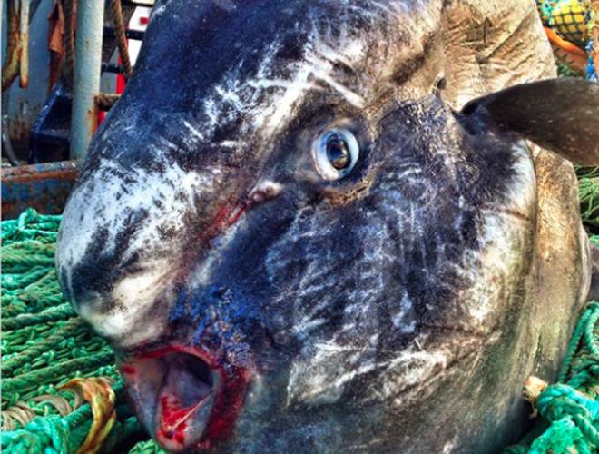 Рыбача на всей территории Арктического региона прибрежного океана, вплоть до побережья Марокко, Федорцов встречает поистине невероятных созданий.