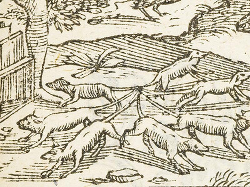 Крысы, живущие на воле, бывают подвержены совершенно особенной болезни: несколько их срастаются между собой хвостами и образуют так называемого крысиного короля, о котором в былые времена имели, конечно, другое понятие, чем теперь, когда его можно видеть почти в каждом музее. Прежде думали, что крысиный король в золотом венце восседает на троне из нескольких сросшихся меж собой подданных и отсюда решает судьбы всего крысиного царства! Во всяком случае верно, что иногда попадается довольно большое число крыс, плотно переплетённых хвостами, они едва могут двигаться и сострадательные крысы из жалости приносят им пищу. До сих пор ещё не знают настоящей причины такого явления. Думают, что какое-то особенное выпотение на хвостах крыс влечёт за собой их слипание, но никто не может сказать ничего положительного. — Альфред Брем