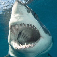 Кайтер спаслась от огромной акулы