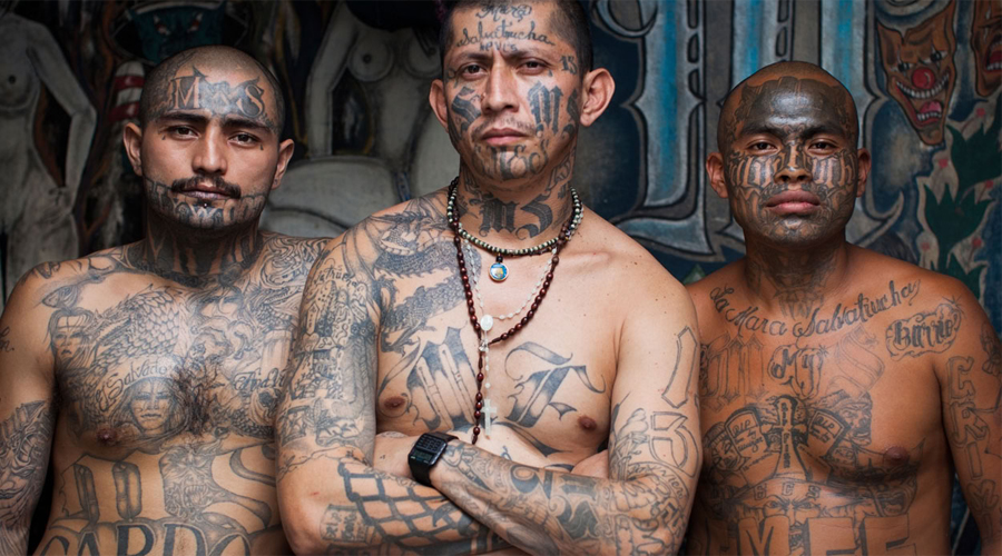 MS13 MS13, иначе известные как Mara Salvatrucha — быстро развивающаяся банда из Сальвадора. Здесь не только новобранцы, но и действительные члены должны постоянно подтверждать свою преданность целям группировки убийствами.