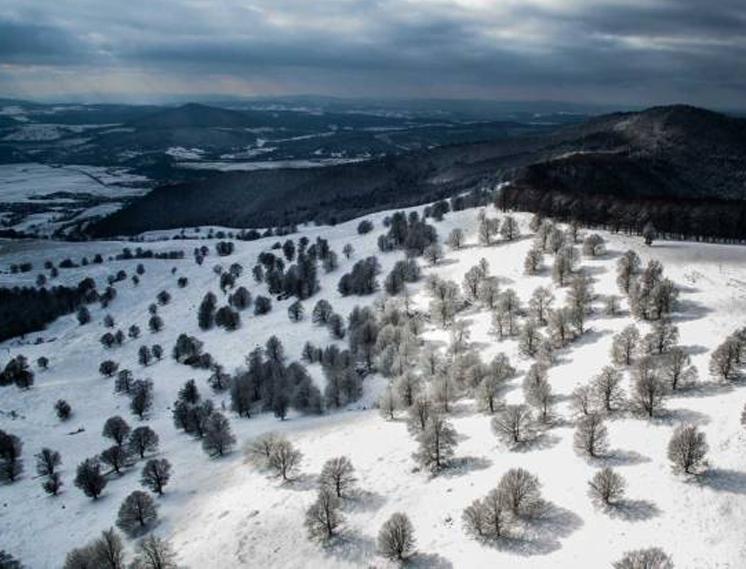 Зимние деревья в Sfanta Ana, Румыния