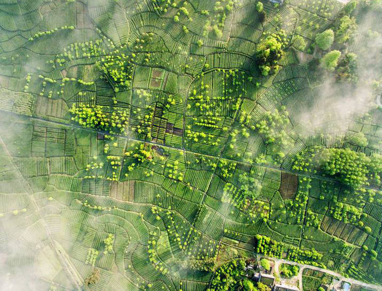 Mingshan, Ya'an, провинция Сычуань, Китай