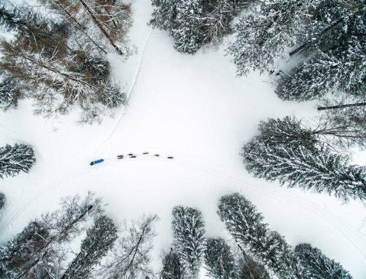 Собачья упряжка в лесу, Челябинская область, Россия