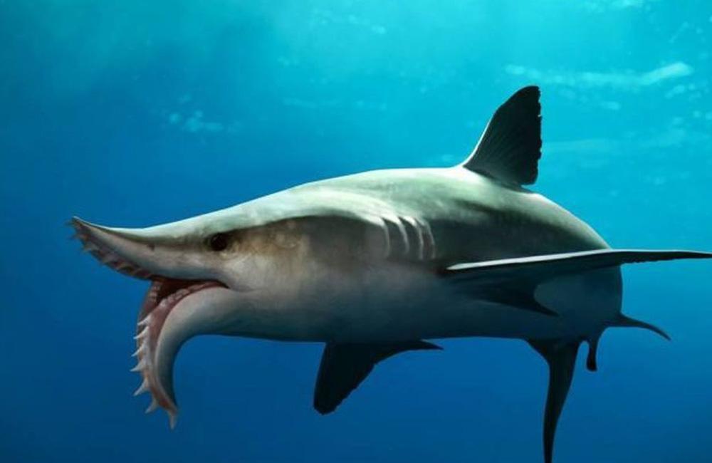 Эдестус Первые найденные останки мегалодона повергли археологов в шок. Ходила даже байка, будто кое-кто из группы больше никогда не заходил в море. Однако, обнаруженный чуть позже Эдестус делает мегалодона ярмарочным пугалом: семиметровая тварь на протяжении всей жизни растила не только зубы, но и самы челюсти. Зубы-то у эдестуса просто не выпадали, превращая его челюсти в кошмарные ножницы.
