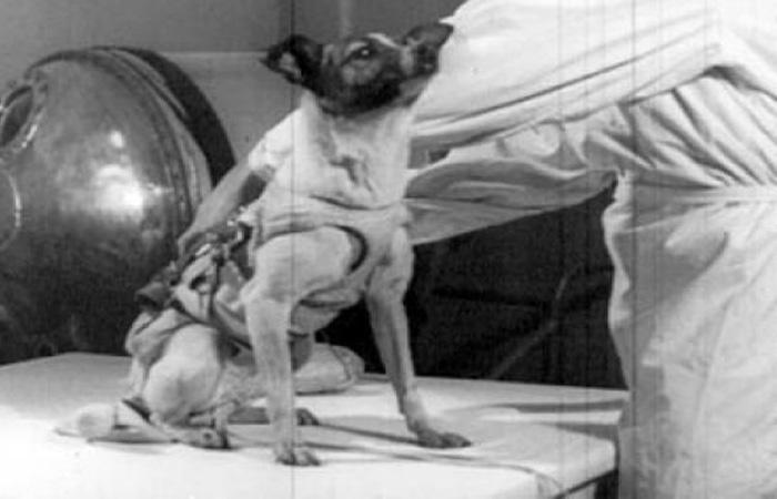 Снаряжение Тренировалась Лайка как настоящий космонавт, на Байконуре. У собачки был даже собственный скафандр, прикрепленный специальными тросиками к стенкам контейнера. Перед самым полетом Лайку усадили в герметичную камеру и установили ее на ракету: первая собака была готова к полету в космос.