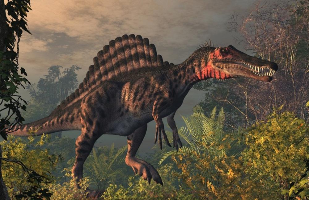 Спинозавр Спинозавр, а вовсе не тираннозавр является самым крупным хищником из всех, что когда-либо жили на Земле. В 1915 году у северной границы Египта проводились раскопки, где и были найдены первые останки спинозавра. Интересно, что археологи целый месяц искали второго динозавра: просто не могли поверить в существование настолько огромного хищника.